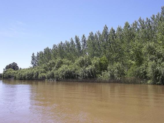 Terreno - Paraná Miní