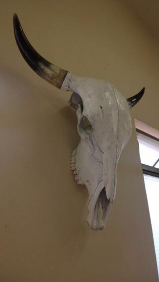 Cabeça De Boi Cranio Caveira Hiper Promoção Especial Hoje