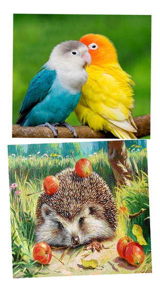 2 Pcs Adorável Hedgehog Papagaio Pintura Diamante 5d Diy Han