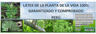 Latex De La Planta De La Vida 100% Garantizado