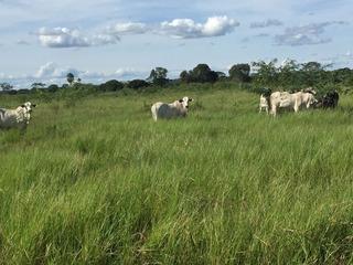 Fazenda De Gado Leiteiro - 4.072 Ha Mato Grosso Sul - Fa-060
