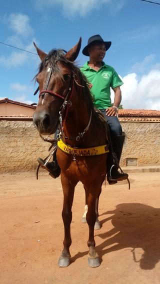 Cavalo Manga Larga Legitomo 4 Anos Na Quarta Muda