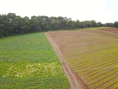 Otimo Preço Terreno Demarcado E Plano Por 33 Mil Em 1000 M2