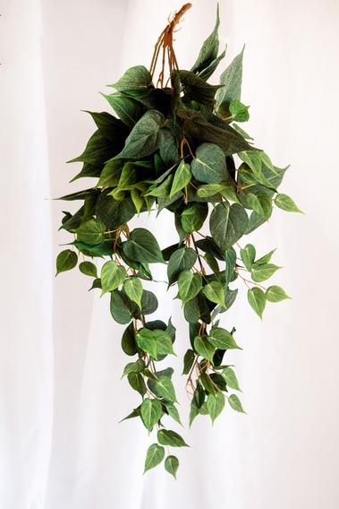 Planta Potus Colgante, Plantas Artificiales