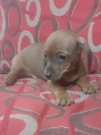 Salchichas Miniatura Cachorros Divinos
