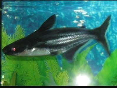 Imagen 1 de 1 de Hermosos Tiburones Iridiscentes