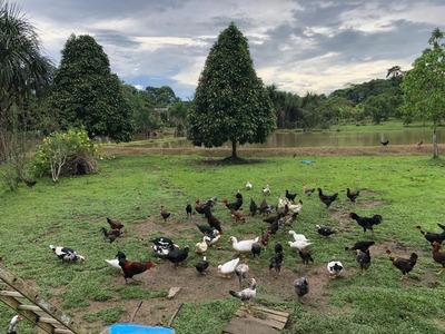 Vendo Terreno De 7 Hectáreas Km 35 Carretera Iquitos - Nauta