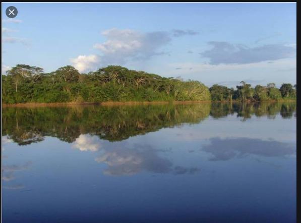 vendo selva virgen sea de los pocos en el mundo en tenerla - 70.000.000 en mercado libre