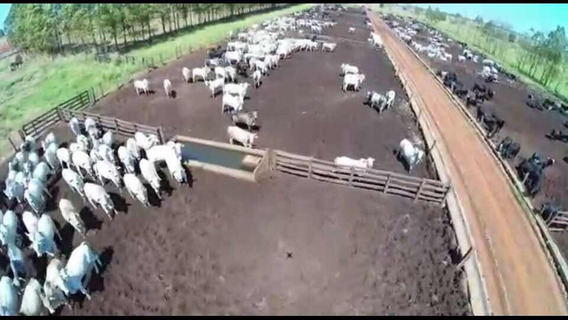 Excelente Fazenda Dupla Aptidão