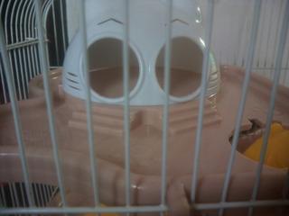 Jaula Hamsters 3 Pisos