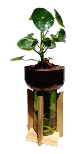 Plantas Interior Cuchara Little Plant 27 Con Soporte