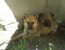 Cachorros En Adopción (leer Descripción)