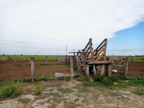 Campo - Ceibas