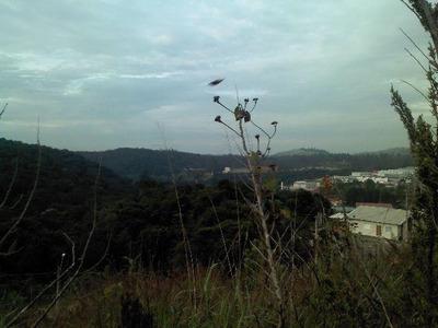 Terreno Residencial À Venda, Chácara Lagoa Branca, Campo Limpo Paulista - Te0039. - Te0039