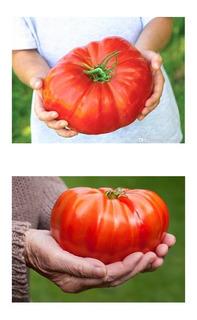 Tomate Gigante Do Guinness 20 Sementes Recorde Mundial 3,2kg