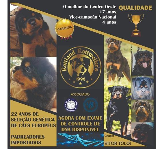 Rottweiler Canil N1 Df Filhotes Alto Padrão Entrega Imediata