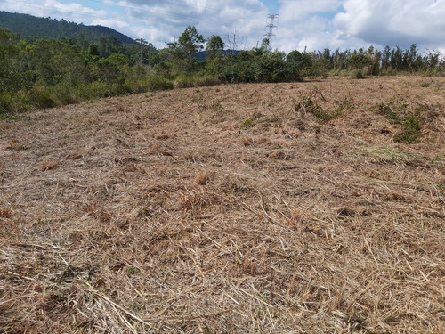 Imagem 1 de 6 de Chacara 4.950 30x165 A 2.500 Do Centro Da Cidade Pariquera-a