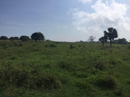 Terreno Carretera Tampico- Poza Rica