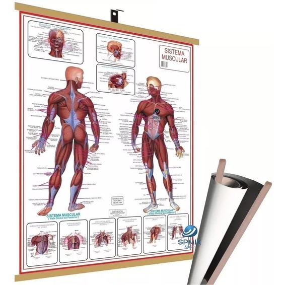 Mapa Corpo Humano Muscular Banner - Laminado + Pendurar