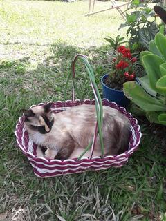 Cama Para Gato O Perro
