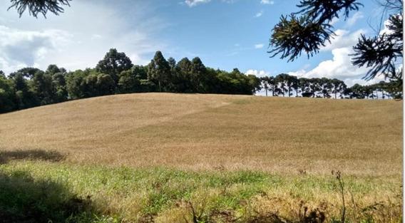 Área Para Venda Em Campo Largo, Guabiroba - 925