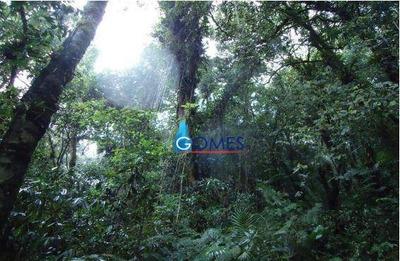 Área De Preservação - Capão Bonito - Ar0038