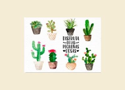 Cuadro Cactus Y Frase