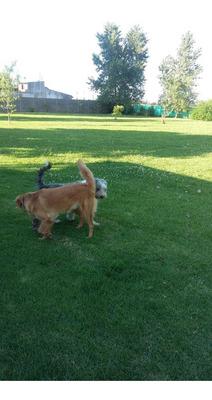 El Refugio Guardería Pensionado Canino Traslados Y Tramites