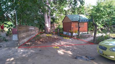 Duoone Projects: La Casa Del Arbol, Palomino 3208715638