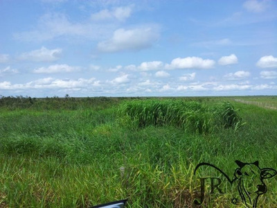 Área Rural Para Venda Em Vilhena - Ot011