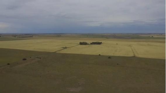El Destino: 430 Has., A 25 Km Sur De Rolón La Pampa