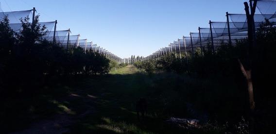 Vendo Finca En Produccion San Rafael Mendoza