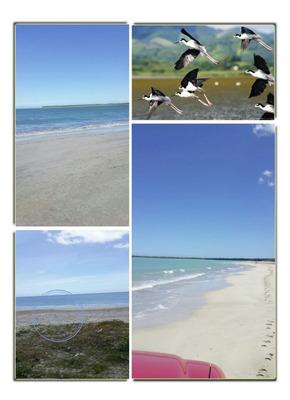 Solar En Miches Con Playa De 20mil Metros Y 50 M2 De Playa