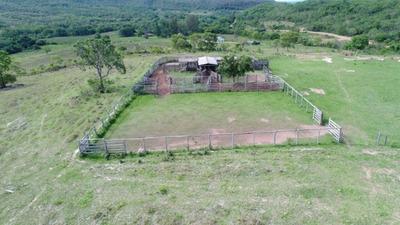 Fazenda A Venda Em Rio Negro - Ms (dupla Aptidão) - 738