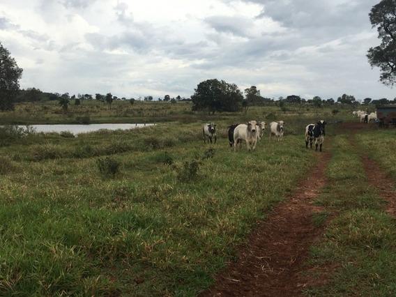 Fazenda A Venda Em Camapuã -ms (pecuária) - 724