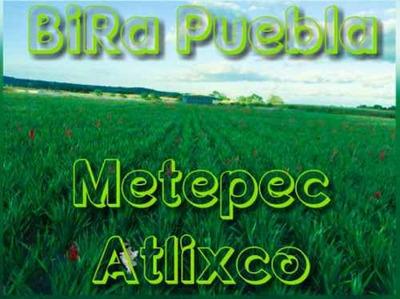Terrenos Campestres En Metepec Atlixco Facilidades De Pago