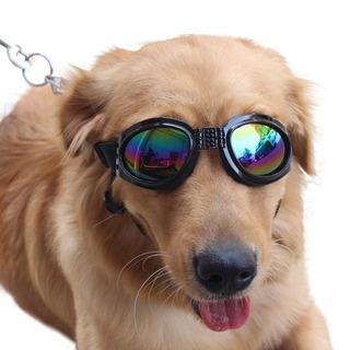 Bull Spring Gafas De Sol Eye Wear Protection Gafas De Mascot