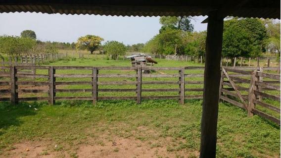 Fazenda Para Venda Em São Félix Do Araguaia, Zona Rural - 990