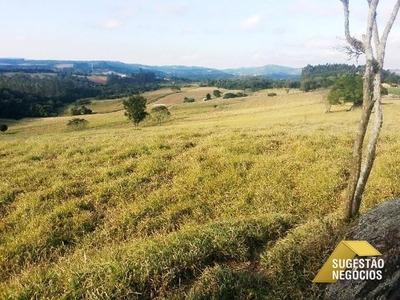 Área Comercial Ou Plantio No Canguera - 2290