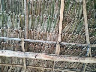 Palma Para Cabañas Kioscos Y Restaurante Tropicales