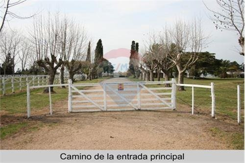 Campo Agrícola Ganadero Lechero 1.434 Has