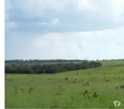 Fazenda Para Venda Em Alcinópolis, Zona Rural - Ms6600