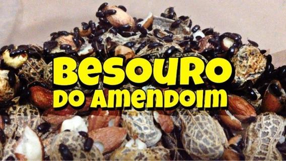Besouro Do Amendoim. ( Start Da Colônia ) . Frete Grátis.