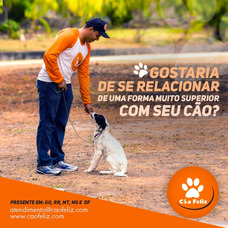 Adestramento, Consultoria Comportamental E Dog Walker