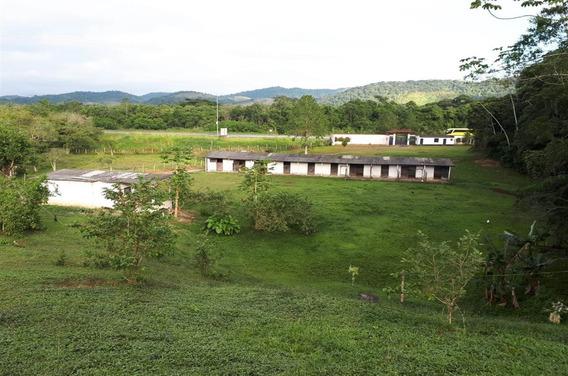 Rural - Venda - Pedro Barros - Miracatu - Ldna465