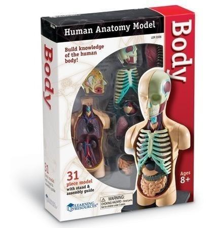 Learning Resources Cuerpo Humano Modelo De Anatomia