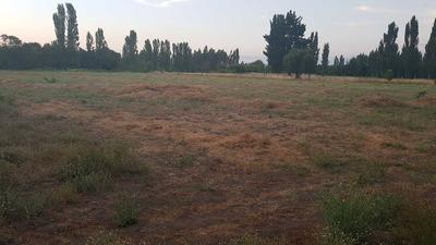 Tierra Region Bio Bio , Terreno Para Trabajar Fertil Y Plana