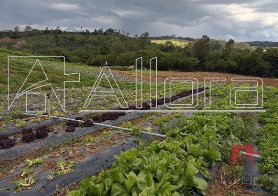 Sítio Rural À Venda, Furquilha, Monte Alegre Do Sul. - Si0006
