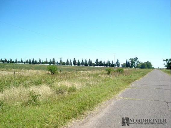 Campo - Gualeguaychu