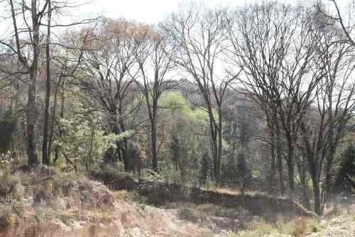 Terreno En Bosque Zona Esmeralda